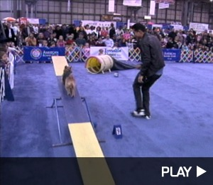 Mario Lopez and the Westminster Obstacle Course