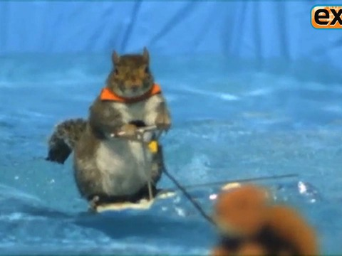 Sneak Peek! A Water-Skiing Squirrel on 'AGT'