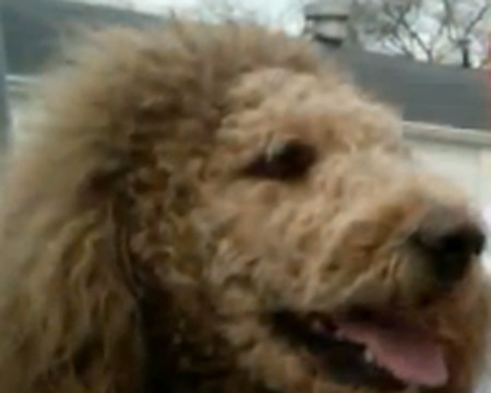 Dog Mistaken for Lion Gives Virginia Residents a Scare