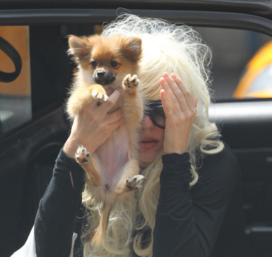 Video! Amanda Bynes Tries to Save Her Gasoline-Soaked Dog