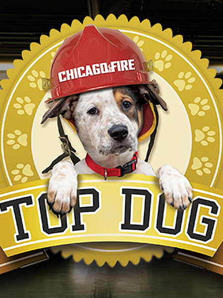 'Chicago Fire' Seeks to Honor Top Firehouse Dog