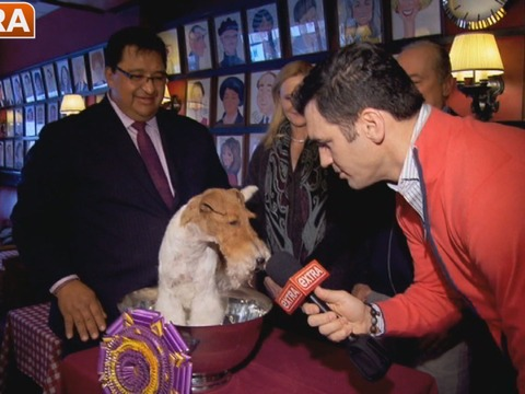 'Extra' Meets 2014 Westminster Dog Show Winner