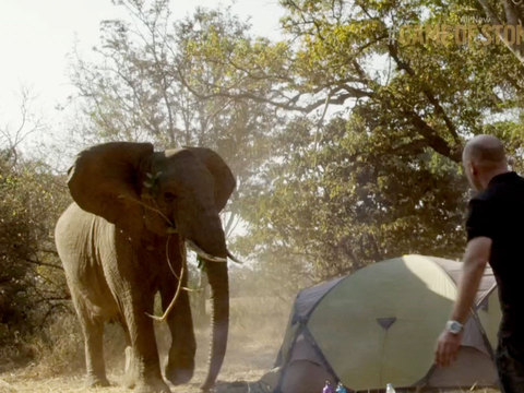 Watch This Crazy Video! An Elephant Tramples Through a Camp on 'Game of Stones'