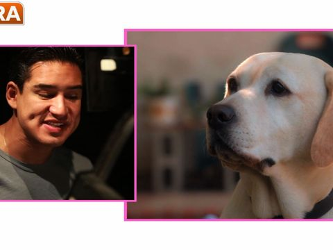 Sneak Peek! Mario Lopez Is 'The Dog Who Saved Easter'