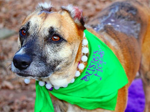 Meet Susie the Hero Dog: Her Story of Tragedy and Triumph Will Melt Your Heart!