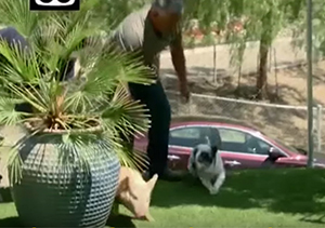 Cesar Millan Incident Under Investigation for Possible Animal Cruelty…