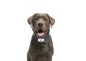 Win It! A Gibi Pet Tracker